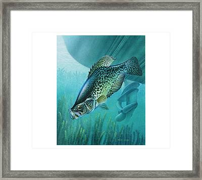 Crappie And Boat Framed Print by JQ Licensing