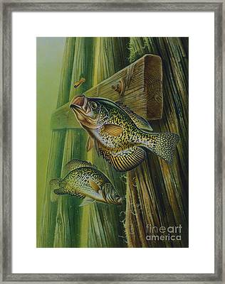Crappie And Bridge Support Framed Print by Jon Q Wright