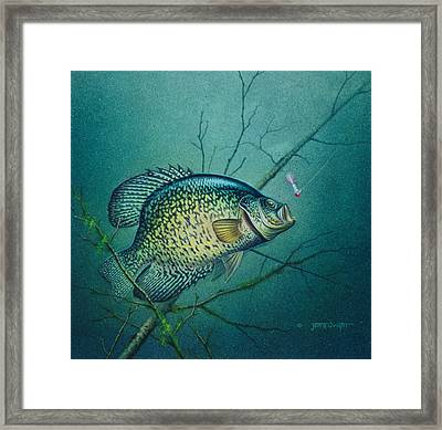 Crappie And Pink Jig Framed Print by Jon Q Wright
