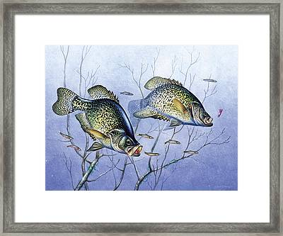 Crappie Brush Pile Framed Print by JQ Licensing