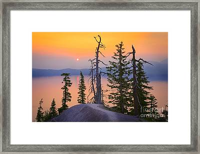 Crater Lake Trees Framed Print by Inge Johnsson