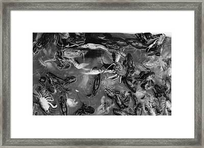 Crawfish Framed Print by Hillery Bosarge