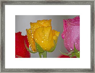 Crazy Cheerful Framed Print by Betsy Knapp