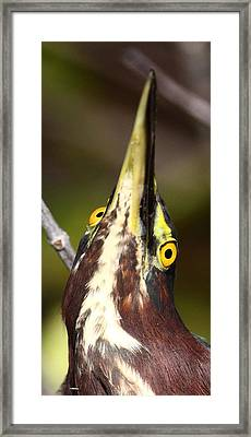 Crazy Eyes Framed Print by Bruce J Robinson