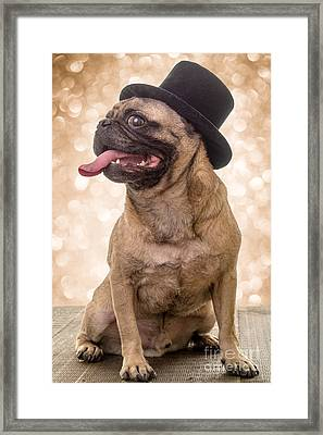 Crazy Top Dog Framed Print by Edward Fielding