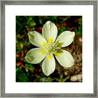 Cream Cup In Park Sierra-ca Framed Print by Ruth Hager