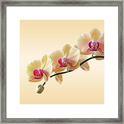 Cream Delight - Square Framed Print by Gill Billington