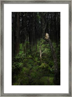 Creature Of The Night Framed Print by Bill Wakeley