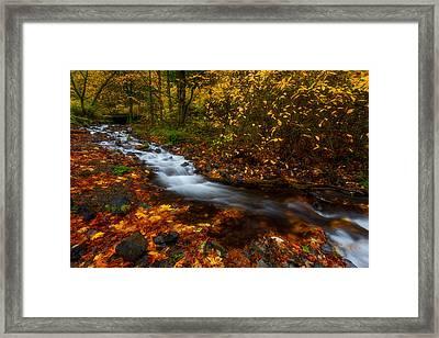 Creekside Colors Framed Print by Darren  White