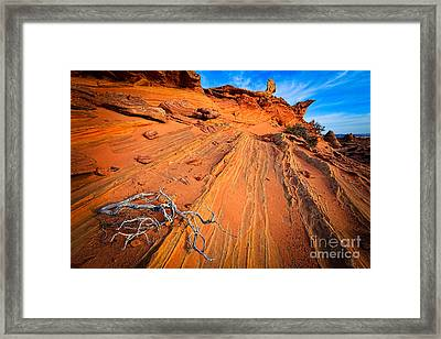Creeping Branches Framed Print by Inge Johnsson