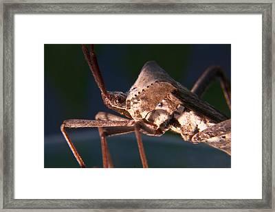 Creepy Bug Framed Print by Douglas Barnett