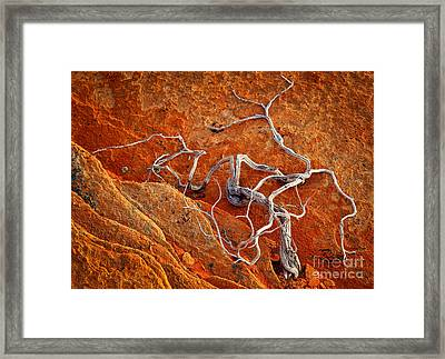 Creepy Crawly Framed Print by Inge Johnsson