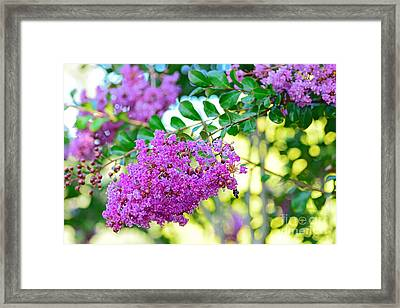 Crepe Myrtle Tree By Kaye Menner Framed Print by Kaye Menner