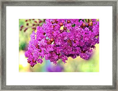 Crepe Myrtle With Droplets By Kaye Menner Framed Print by Kaye Menner