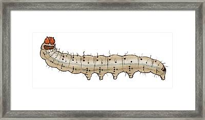 Crescent Caterpillar Framed Print by Mikkel Juul Jensen