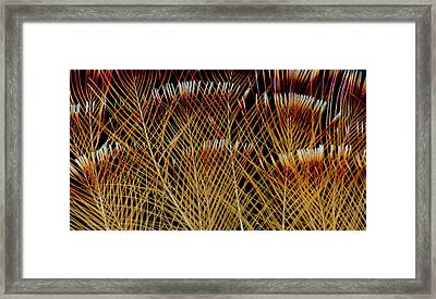 Crested Crown Feathers Of Guianan Framed Print by Darrell Gulin