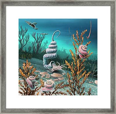 Cretaceous Heteromorph Ammonites Framed Print by Richard Bizley
