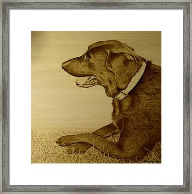 Crockett Framed Print by Jo Schwartz
