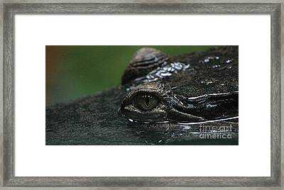 Croc's Eye-1 Framed Print by Gary Gingrich Galleries