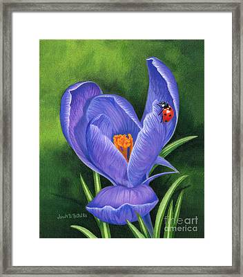 Crocus And Ladybug Framed Print by Sarah Batalka