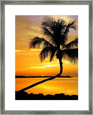 Crooked Palm Framed Print by Karen Wiles