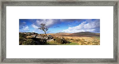 Crooked Tree At Feather Tor, Staple Framed Print by Panoramic Images