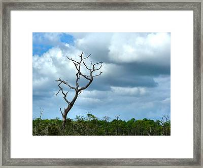Crooked Tree On Crooked Island Framed Print by Julie Dant