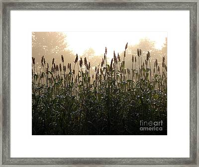 Crops In Fog Framed Print by Olivier Le Queinec