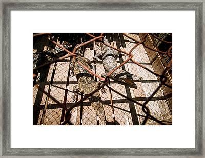 Crossbred Crocodiles Framed Print by Paul Williams