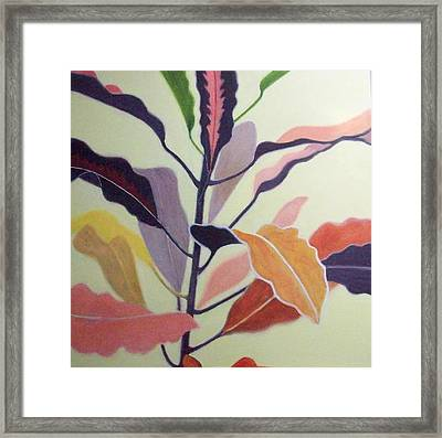 Croton Framed Print by Mary Adam