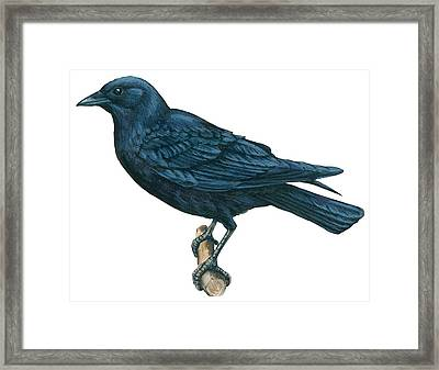 Crow Framed Print by Anonymous