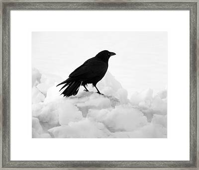 Crow In Winter Framed Print by Gothicolors Donna Snyder