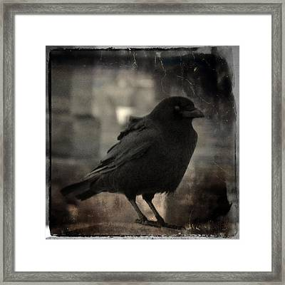 Crow Portrait Framed Print by Gothicolors Donna Snyder