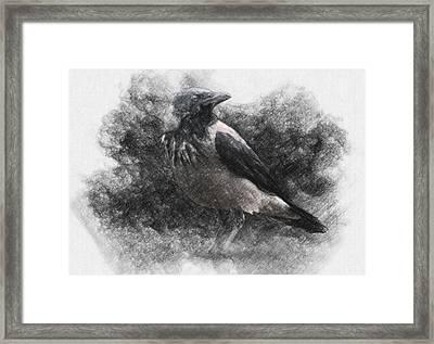 Crow Framed Print by Taylan Soyturk