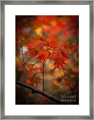 Crown Of Fire Framed Print by Mike Reid