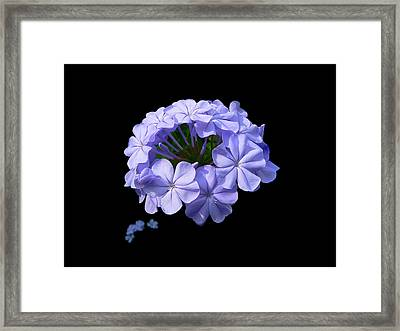 Crown Of Glory Framed Print by Doug Norkum