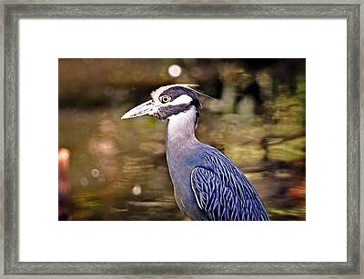 Crowned One Framed Print by Marty Koch