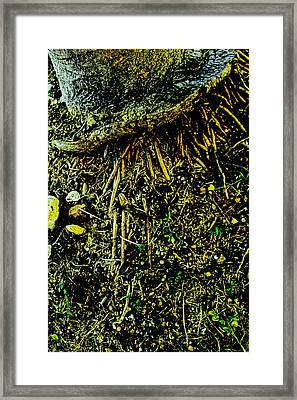 Crowned Roots With A Perspective Framed Print by Sandra Pena de Ortiz