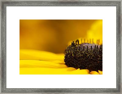 Crowning Sunshine Framed Print by Lisa Knechtel