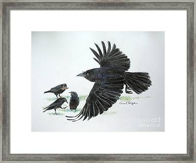 Crows Framed Print by Carol Veiga