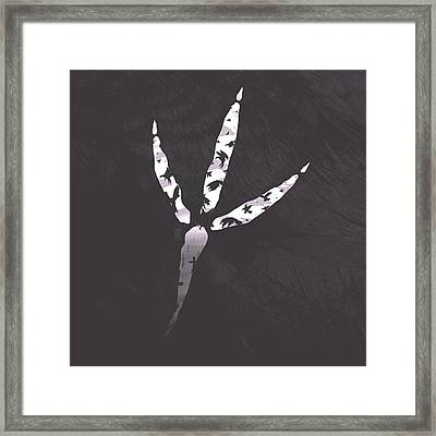 Crow's Foot Framed Print by Daniel Hapi