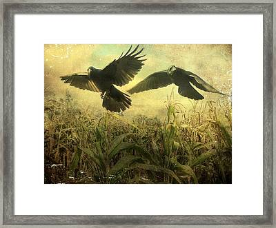 Crows Of The Corn 2 Framed Print by Gothicolors Donna