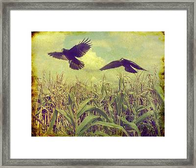 Crows Of The Corn Framed Print by Gothicolors Donna