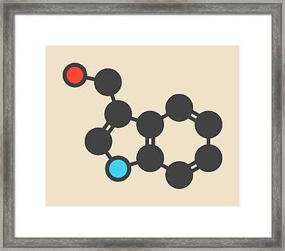 Cruciferous Vegetable Molecule Framed Print by Molekuul