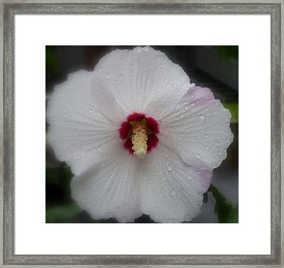 Crying Sharon Framed Print by Lingfai Leung