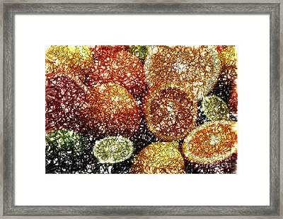 Crystal Grapefruit Framed Print by Yael VanGruber