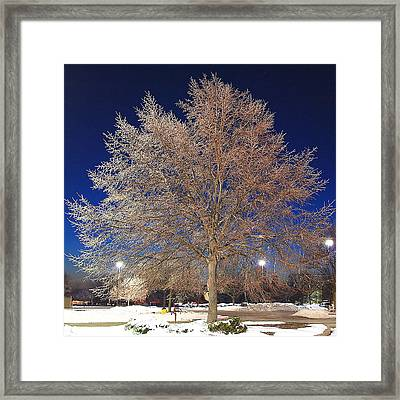 Crystal Tree Framed Print by Frozen in Time Fine Art Photography