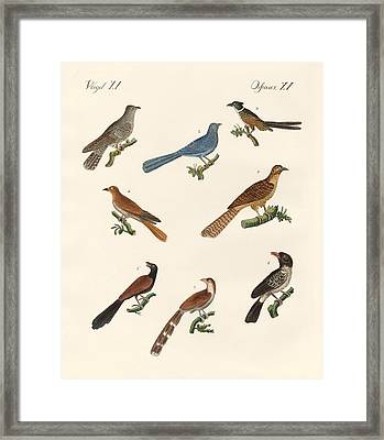 Cuckoos From Various Countries Framed Print by Splendid Art Prints
