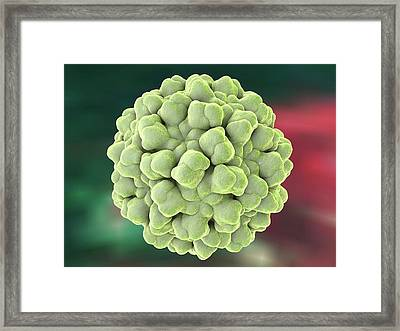 Cucumber Necrosis Virus Framed Print by Kateryna Kon