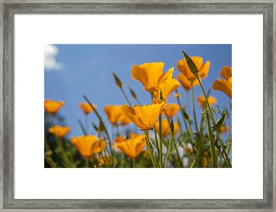 Cup Of Gold Framed Print by Georgia Fowler